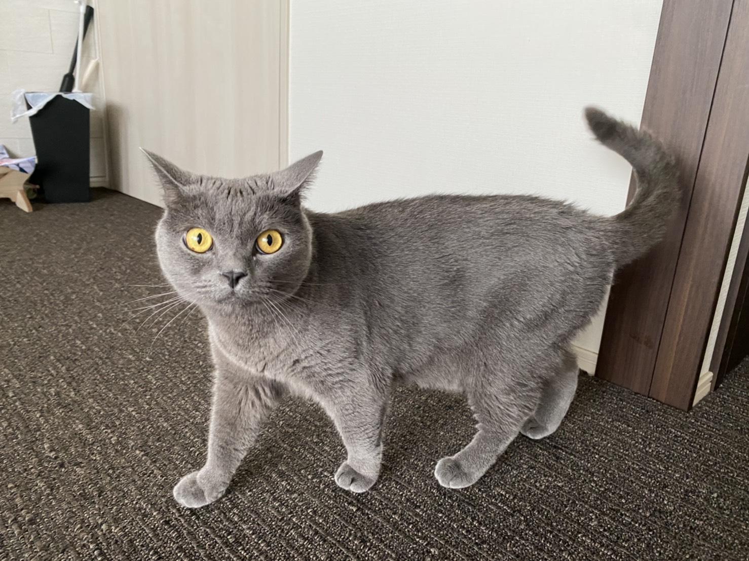 猫 ペットシッター 豊島区